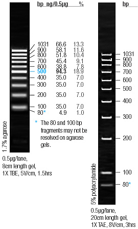 Bclab Electrophoresis